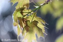 IMG_2170_2-photoshopw