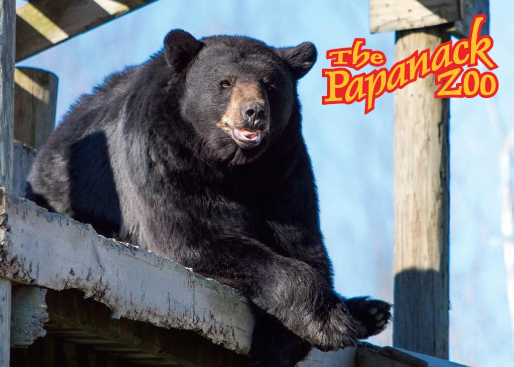 Papanack_zoo_barnaryd_001