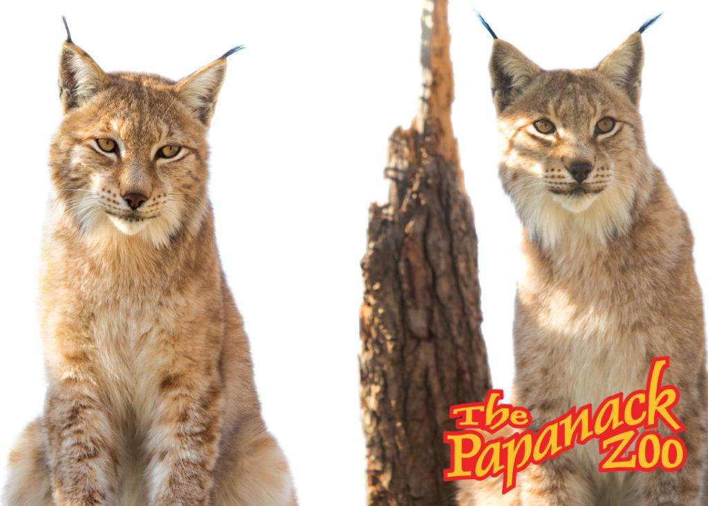 Papanack_zoo_barnaryd_002