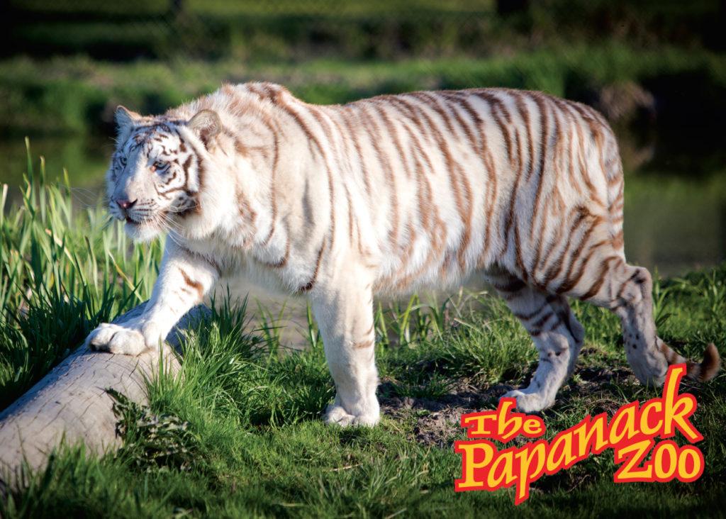 Papanack_zoo_barnaryd_007